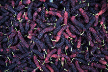 Load image into Gallery viewer, Organic Mulberries | Order Online | Nationwide Delivery