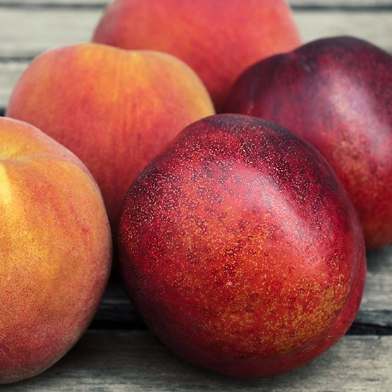 Organic Mixed Peaches & Nectarines