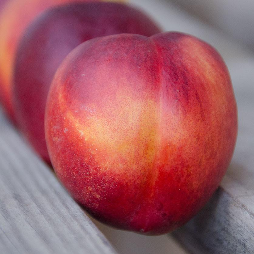 Organic Yellow Nectarines | Organic Fruit Delivery