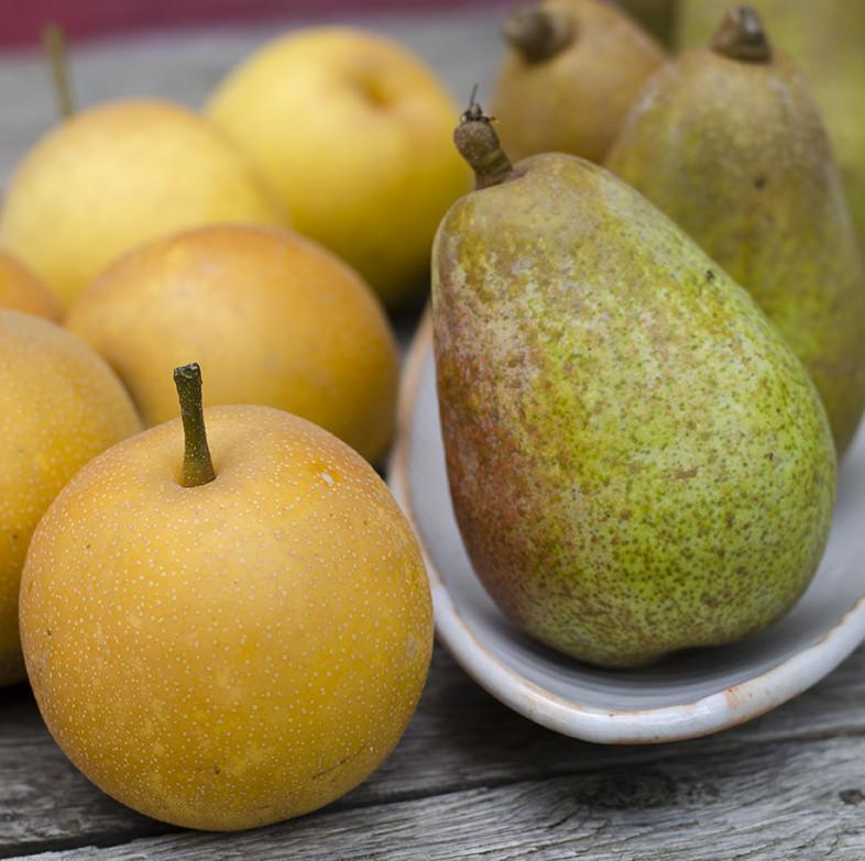 Organic Mixed Asian & European Pears
