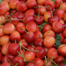 Load image into Gallery viewer, Organic Rainier Cherries | Organic Fruit Delivery