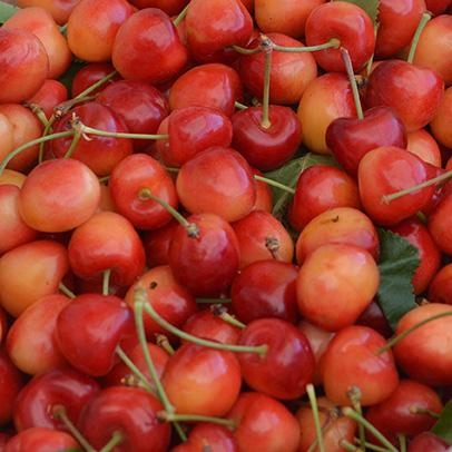 Organic Rainier Cherries | Organic Fruit Delivery