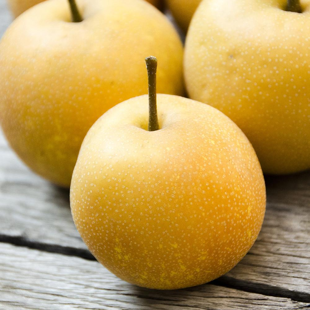 Asian pear photo picture