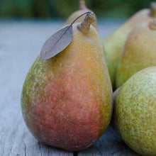Organic Warren Pears | Organic Fruit Delivery