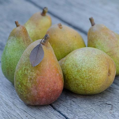 Warren Pear Legacy Petite | Organic Fruit Club | 4 Shipments