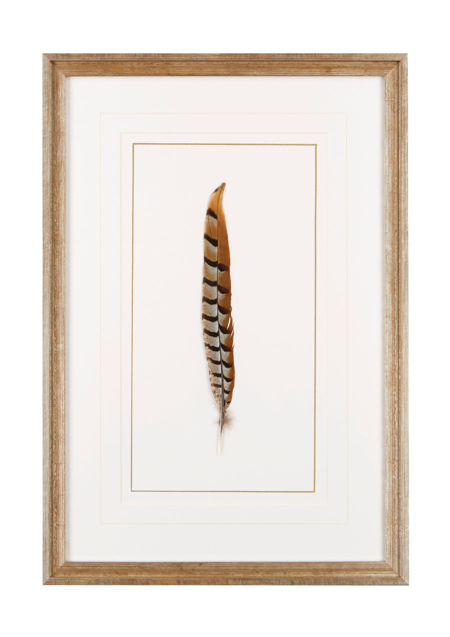 WEEKS PHEASANT FEATHER - TABBY HOME