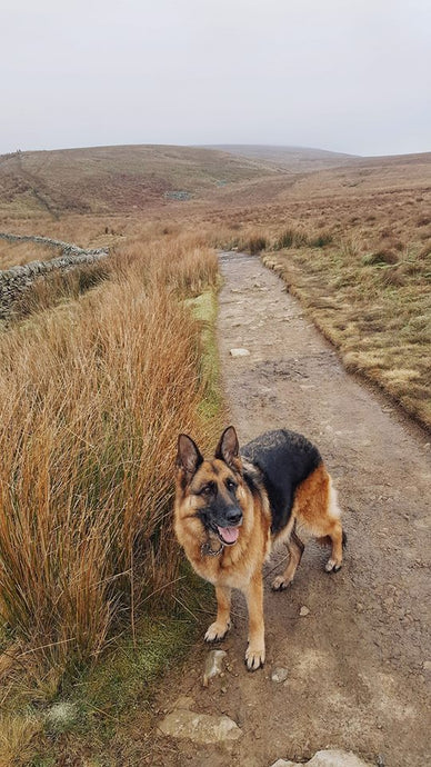 Adventure of the Week - Whernside Mountain
