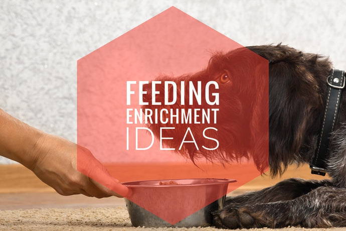 Enrichment Feeding - Think Outside the Bowl!