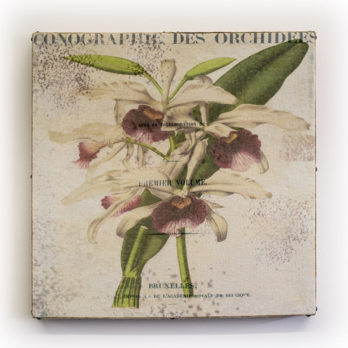 Wall Art Multi White Orchid Square