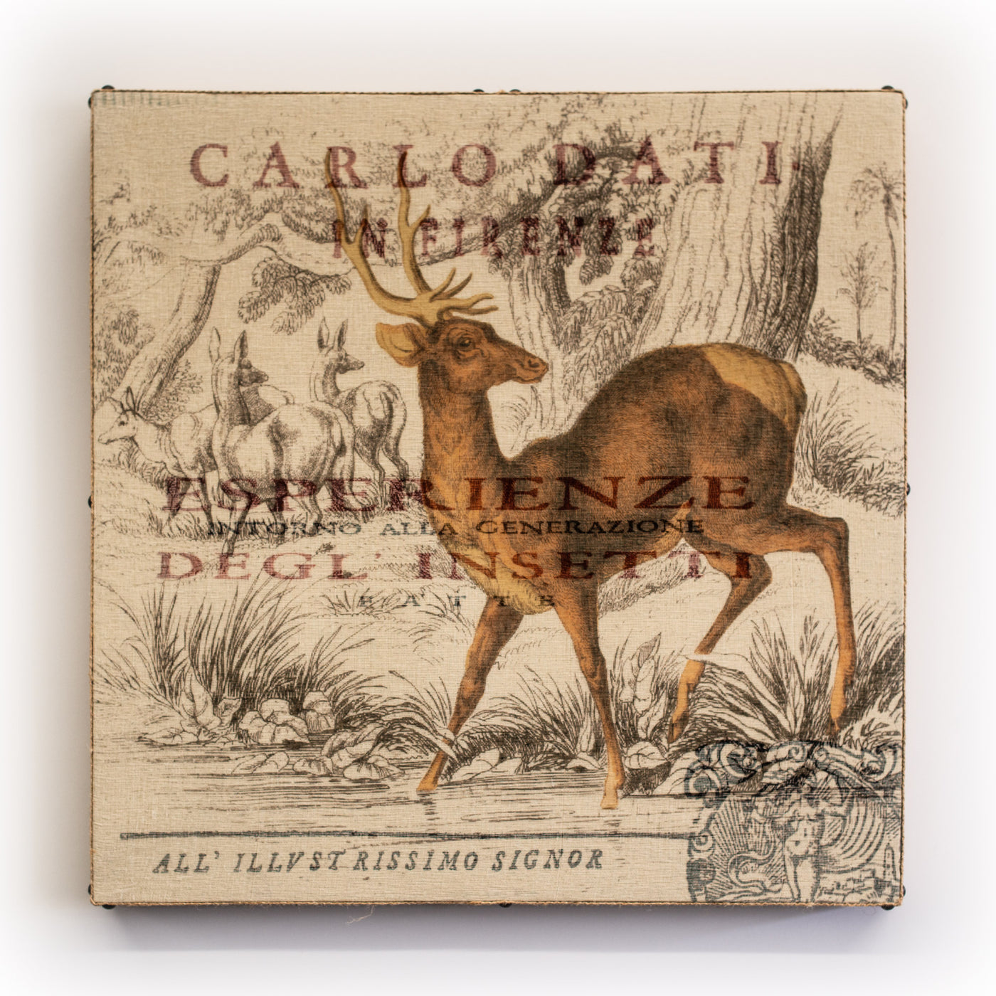 Wall Art Multi Layered Carlo Deer Square