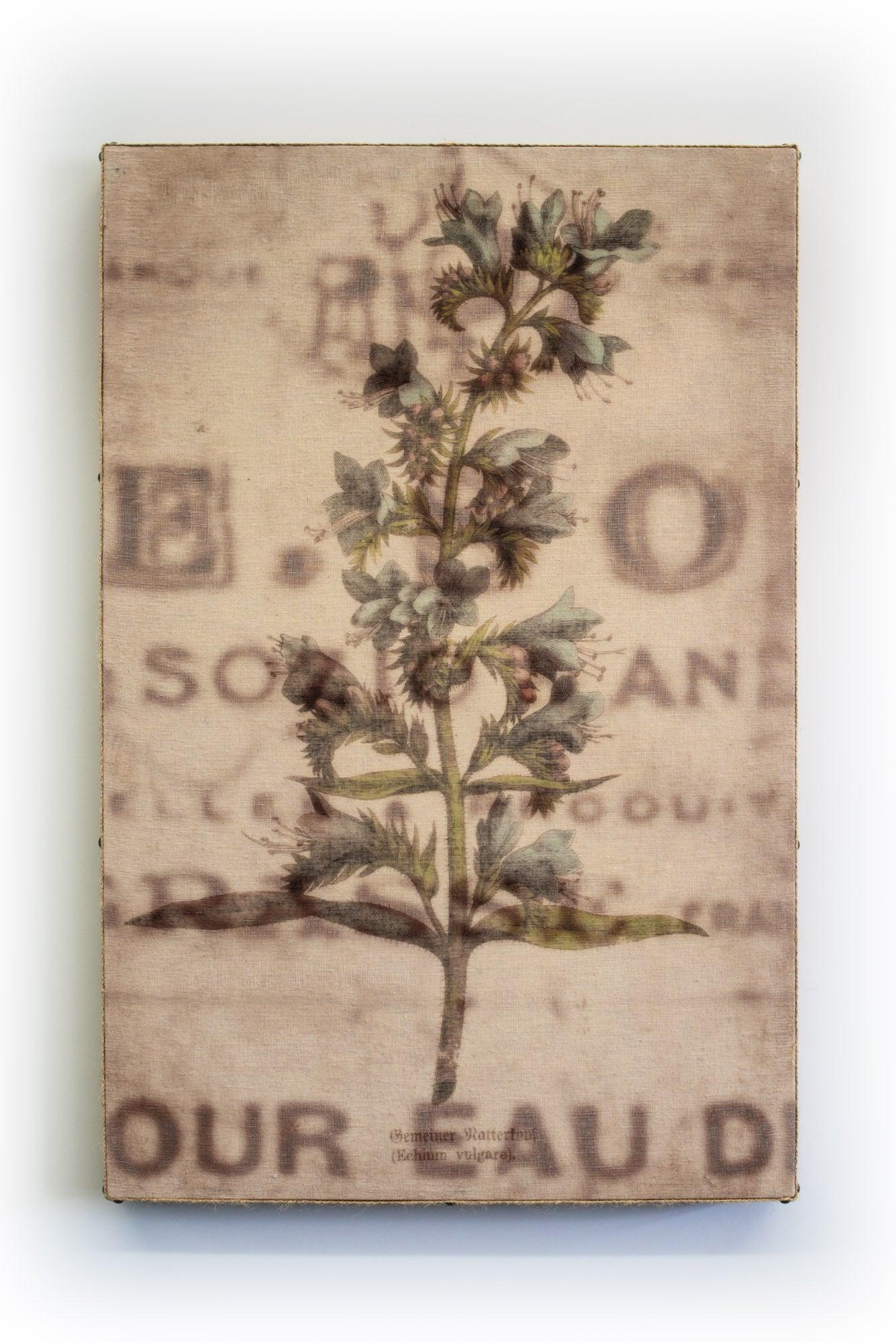 Wall Art Multi Layered Echium