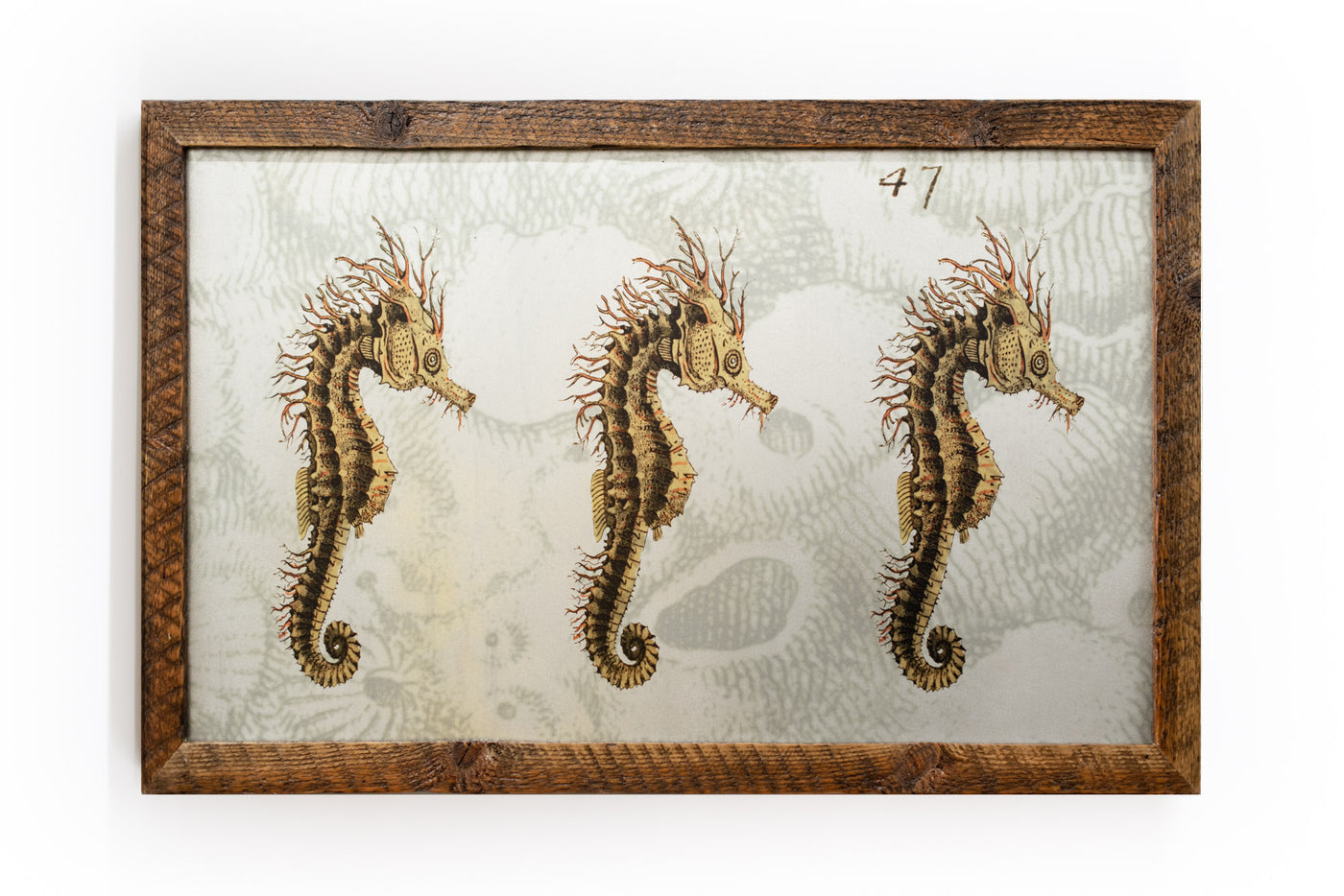 3 Seahorses on Galvanized Steel