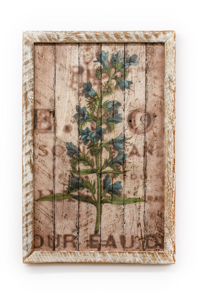 Reclaimed Barn Wood Echium