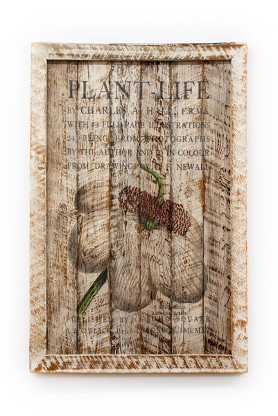Reclaimed Barn Wood Plantlife