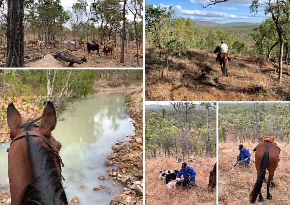 Images of an Adventure Out Bush