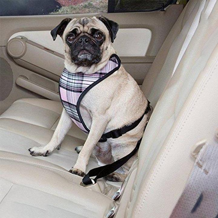 Pet Car Seat Belt-dudechoice.com