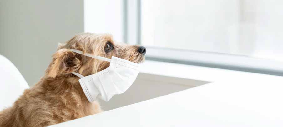 Canine Coronavirus: A Cause For Concern?