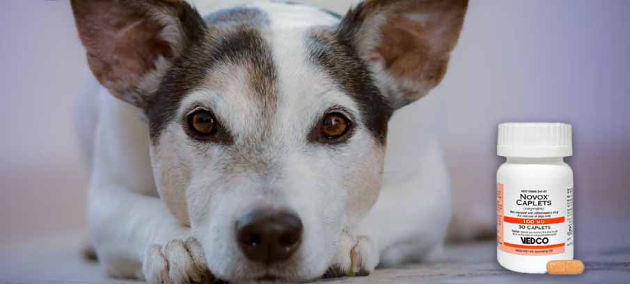 Novox For Dogs: Side Effects, Dosage, And Alternatives