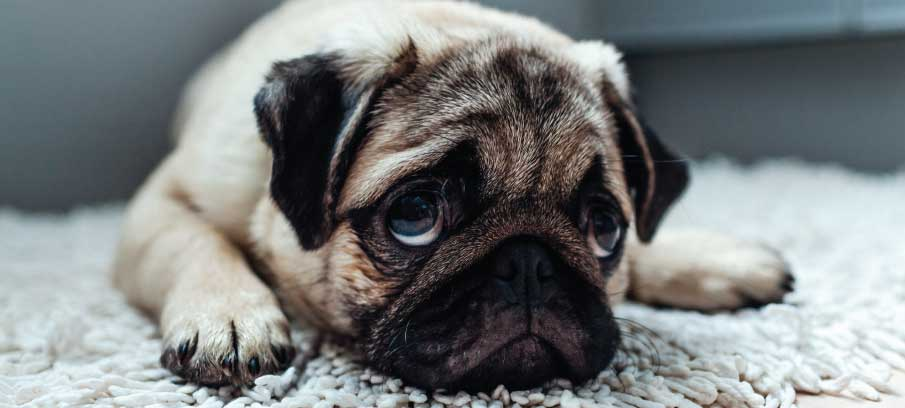 sad-dog-how-to-spot-the-signs-and-cheer-them-up