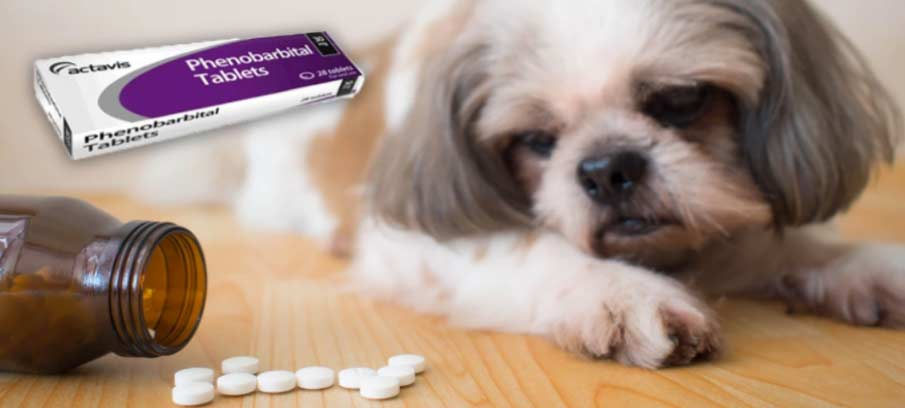 Phenobarbital for Dogs: Dosage, Side Effects, and Natural Alternatives