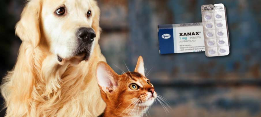 Xanax For Dogs and Cats: Dosage, Side Effects, And Alternatives