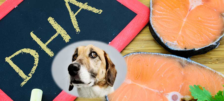 dha-for-dogs-benefits-dosage-where-to-buy