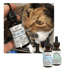 cbd for pets cat oil collection
