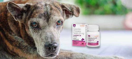 Side-effects-of-carprofen-for-dogs-dosage