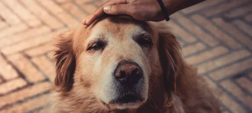 Natural-remedies-for-arthritis-in-dogs-symptoms