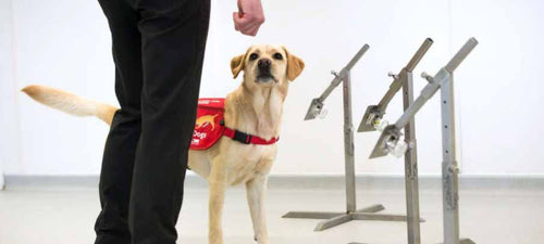 Dogs Might Be The Solution To COVID-19 Testing