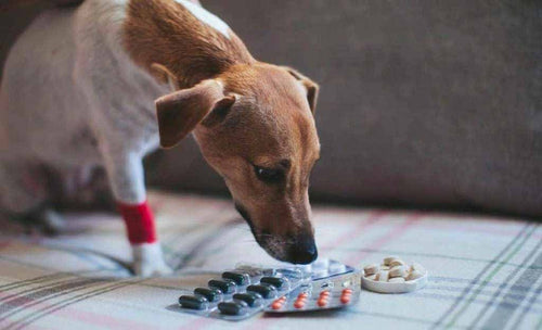 what-can-i-give-my-dog-for-pain