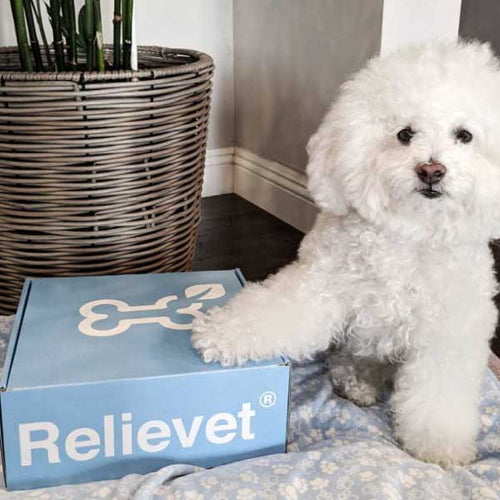 cbd for pets package