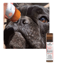 CBD for pets topical collection