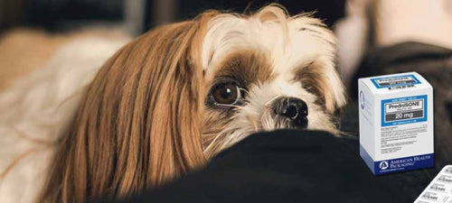 dosage-of-prednisone-for-dogs-side-effects