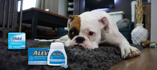 Side effects of naproxen for dogs alternatives