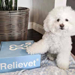 calming chews for dogs customer