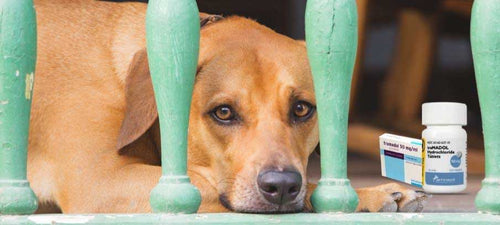 Dosage-of-tramadol-for-dogs-side-effects