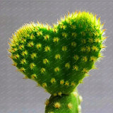 Growing Cactus Is Easy - 300 Pcs