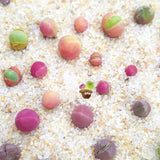 Gum Ball Succulents - 100 Seeds