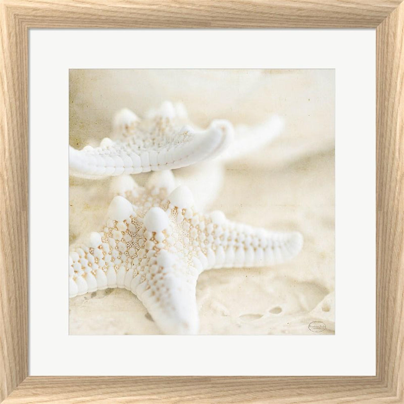 Brookview Studio Seashore Stars White Washed Rounded Oatmeal Faux Wood R817694-AEAEAGJEMY
