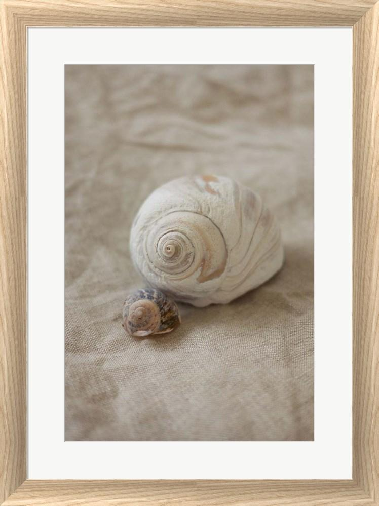 P.S. Art Studios Shells I White Washed Rounded Oatmeal Faux Wood R939521-AEAEAGJEMY