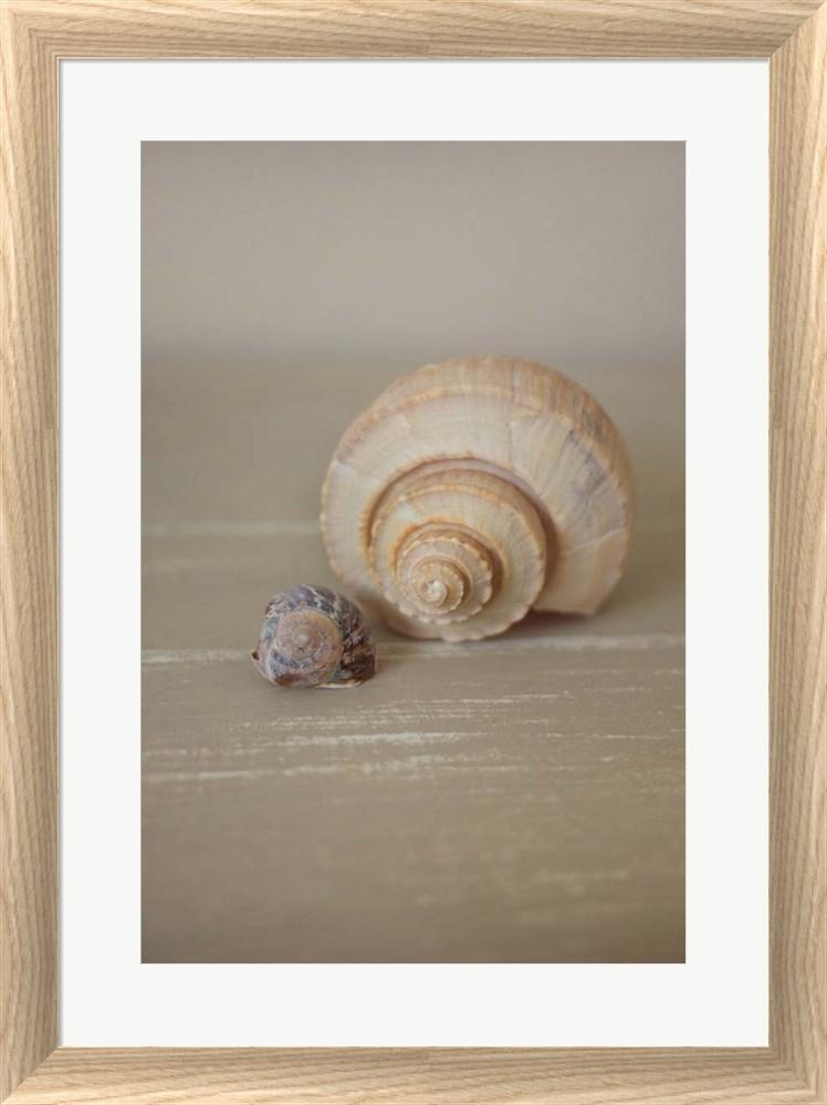 P.S. Art Studios Shells on Beige III White Washed Rounded Oatmeal Faux Wood R939532-AEAEAGJEMY