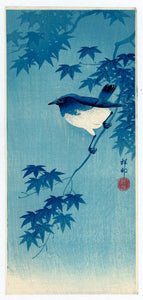 Ohara Kōson: Blue Robin on Maple Branch