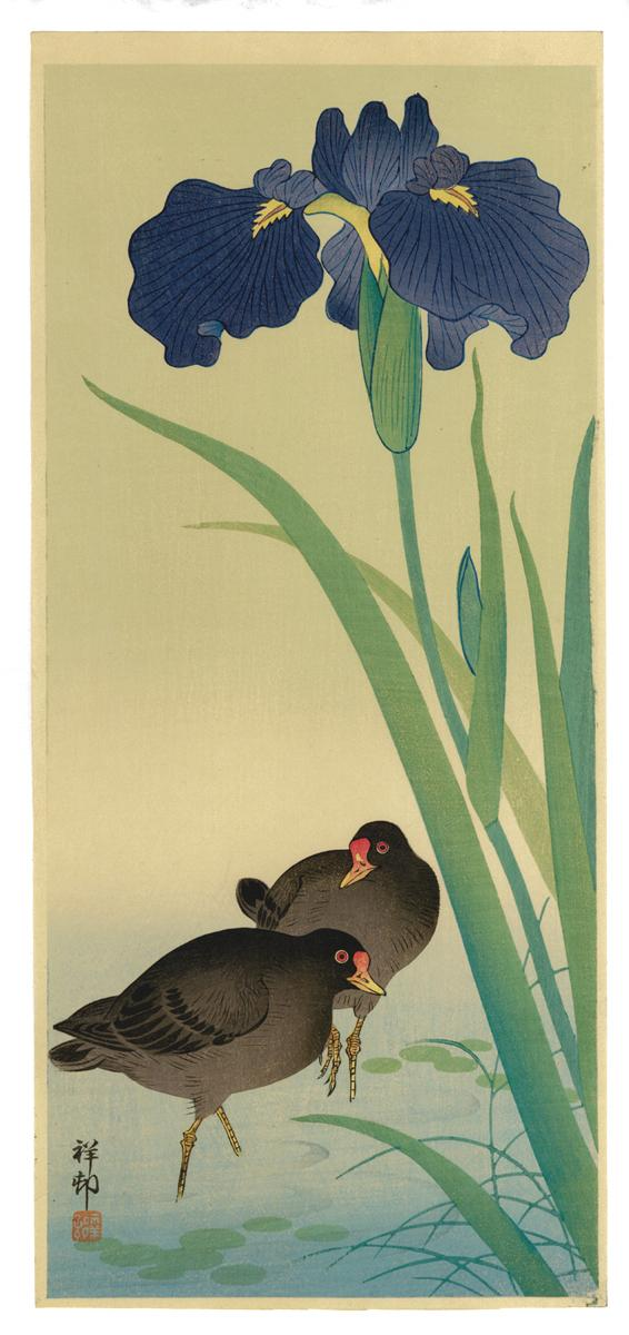 Ohara Kōson: Two Gallinules with Iris