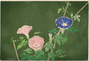 Kiyochika: Morning Glories