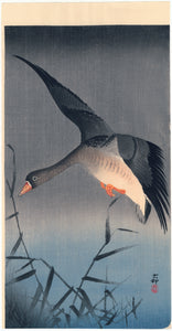 Ohara Kōson: Goose in Flight over Reeds