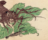 Kawanabe Kyosai 河鍋 暁斎: Lobster and Shrimp