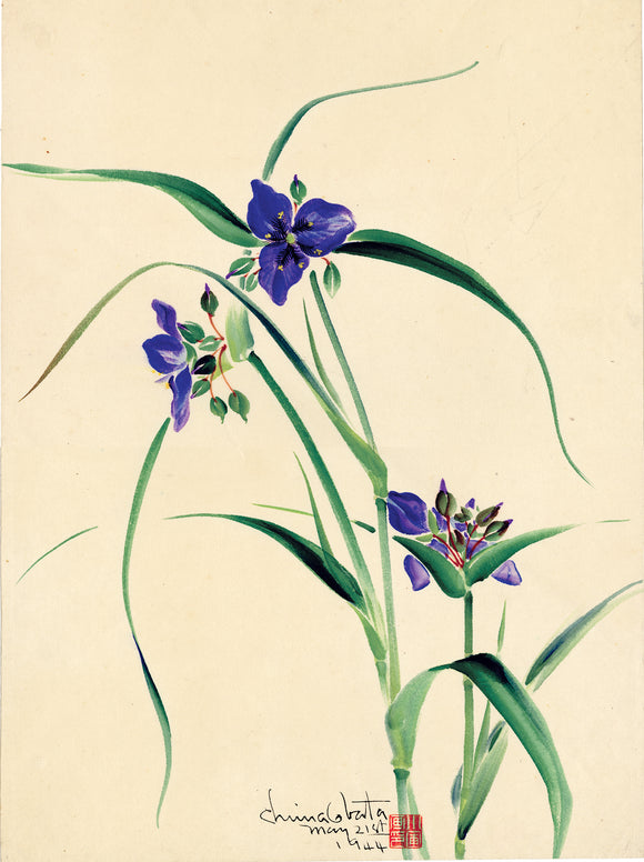 Obata: Watercolor of Purple Spiderwort Flowers