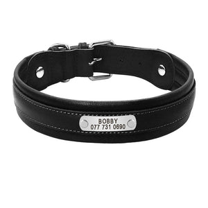 Inner Padded Leather Dogs ID Collars - 2 Dogs & A Cat