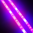 Plant Growth RED:BLUE /660nm:460nm  LED Grow Light  SMD2835 120LEDs 12V 24W Per Meter Strip
